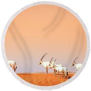 Round Beach Towel featuring the photograph Arabian Oryx by Alexey Stiop