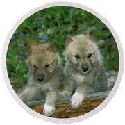 Arctic Wolf Canis Lupus Tundrarum Round Beach Towel