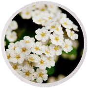 Round Beach Towel featuring the photograph Bridal Veil Spirea by Brenda Jacobs