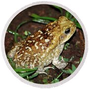 Cane Toad Round Beach Towel