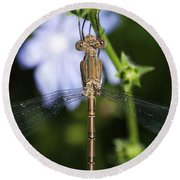 Round Beach Towel featuring the photograph Dragonfly by Nikki McInnes