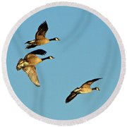 3 Geese In Flight Round Beach Towel