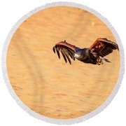 Round Beach Towel featuring the photograph Harris Hawk by Alexey Stiop