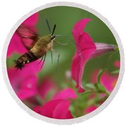 Round Beach Towel featuring the photograph Hummer Moth by Heidi Poulin