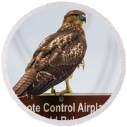 Round Beach Towel featuring the photograph Juvenile Red-tailed Hawk by Ricky L Jones