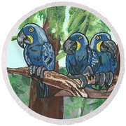 3 Macaws Round Beach Towel