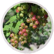 Round Beach Towel featuring the photograph My Currant by Elvira Ladocki