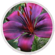 Round Beach Towel featuring the photograph Nice Lily by Elvira Ladocki