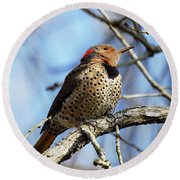 Northern Flicker Woodpecker Round Beach Towel by Robert L Jackson