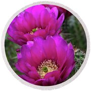 Round Beach Towel featuring the photograph Pink Hedgehog Cactus  by Saija Lehtonen