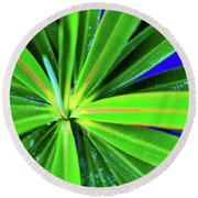 Plants And Flowers In Hawaii 547 C Round Beach Towel