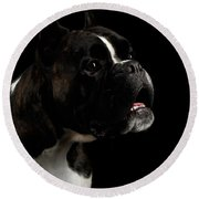 Purebred Boxer Dog Isolated On Black Background Round Beach Towel