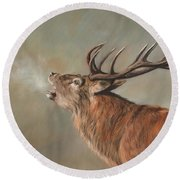 Red Deer Stag Round Beach Towel by David Stribbling