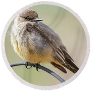 Say's Phoebe Round Beach Towel