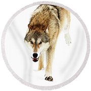 Round Beach Towel featuring the photograph The Attack by Steve McKinzie