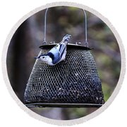 White Breasted Nuthatch  Round Beach Towel by Yumi Johnson