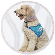 3010.057 Therapet Round Beach Towel by M K  Miller