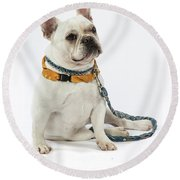 3010.068 Therapet Round Beach Towel by M K  Miller