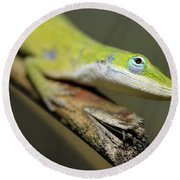 Anole Round Beach Towel
