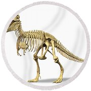 3d Rendering Of A Tyrannosaurus Rex Round Beach Towel