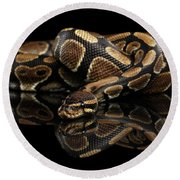 Ball Or Royal Python Snake On Isolated Black Background Round Beach Towel