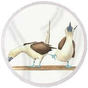 Blue Footed Boobies Round Beach Towel