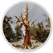 Bristlecone Pine Tree 1 Round Beach Towel