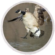 Canada Goose Round Beach Towel by Tam Ryan