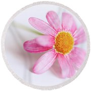 Round Beach Towel featuring the photograph Pink Aster Flower by Nick Biemans