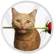 Portrait Of Ginger Cat Brought Rose As A Gift Round Beach Towel