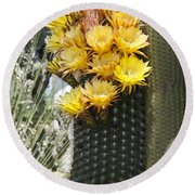 Yellow Cactus Flowers Round Beach Towel by Jim And Emily Bush
