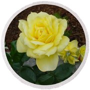 4 Yellow Roses Round Beach Towel by Shirley Heyn