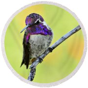 Costas Hummingbird  Round Beach Towel by Saija  Lehtonen