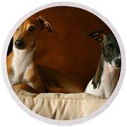 Italian Greyhounds Round Beach Towel