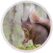 Red Squirrel - Scottish Highlands #8 Round Beach Towel