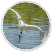 Snowy Egret Flight Round Beach Towel