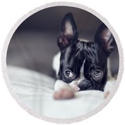 Boston Terrier Puppy Round Beach Towel by Nailia Schwarz