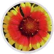 Round Beach Towel featuring the photograph Summer Flower by Elvira Ladocki