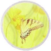 Tiger Swallowtail Butterfly On Cosmos Flower Round Beach Towel by A Gurmankin