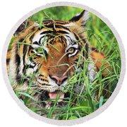 Bengal Tiger In Wild. Round Beach Towel