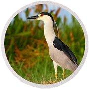 Black Crowned Night Heron Round Beach Towel