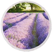Lavender Fields Round Beach Towel