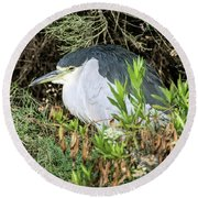 Round Beach Towel featuring the photograph Black-crowned Night Heron by Tam Ryan