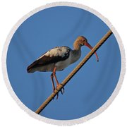 Round Beach Towel featuring the photograph 8- Brown Ibis by Joseph Keane