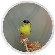 Lesser Goldfinch Round Beach Towel