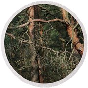 Round Beach Towel featuring the photograph Pine Forest by Dariusz Gudowicz