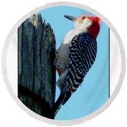 #8671 Woodpecker Round Beach Towel by Barbara Tristan