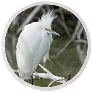 Round Beach Towel featuring the photograph Snowy Egret by Tam Ryan