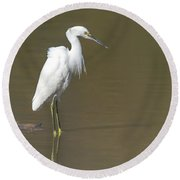Snowy Egret Round Beach Towel by Tam Ryan