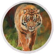Amur Tiger Round Beach Towel by David Stribbling